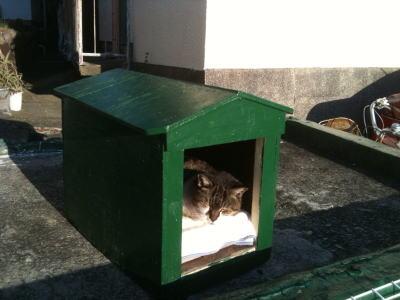Walking中に出会った逗子マリーナ近所の昼寝猫。猫も腹式呼吸するのかな