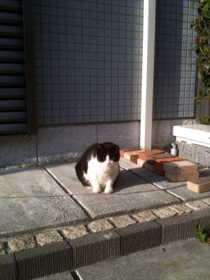 昨日の午後。暖かい日だまりの中で。今日は寒くて雨だから、昨日が懐かしい!