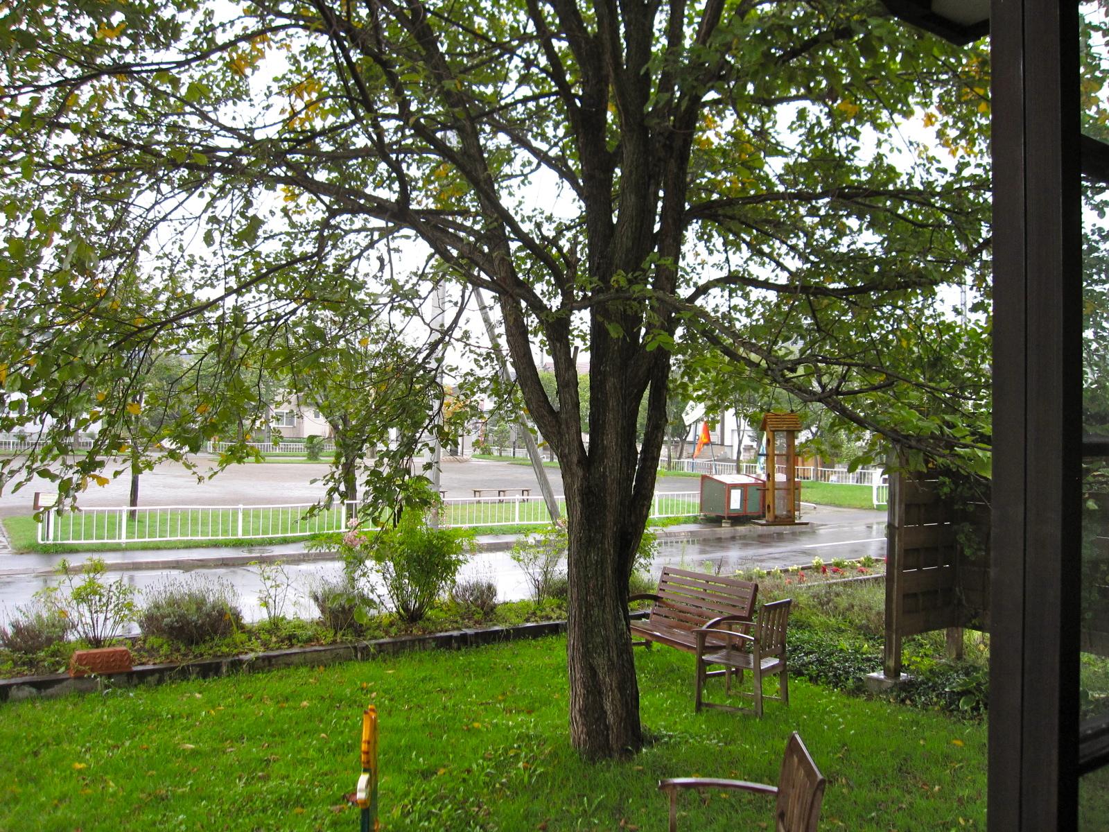 店の前に立つ木
