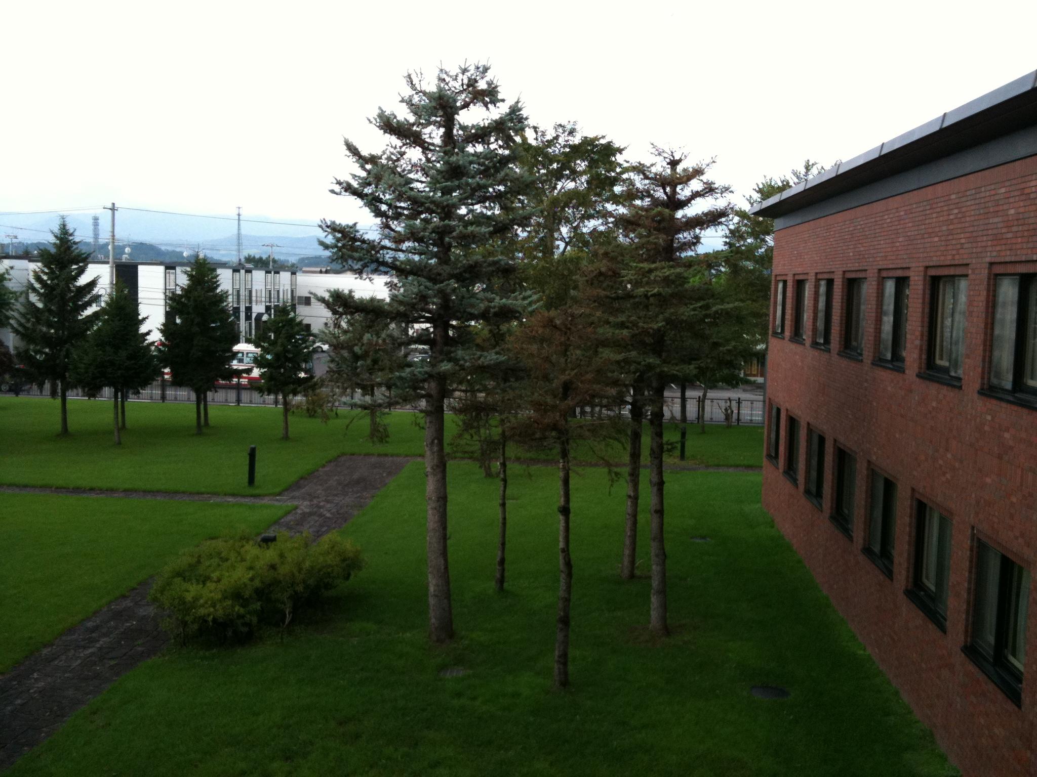 緑とブラウンの校舎。素敵です!