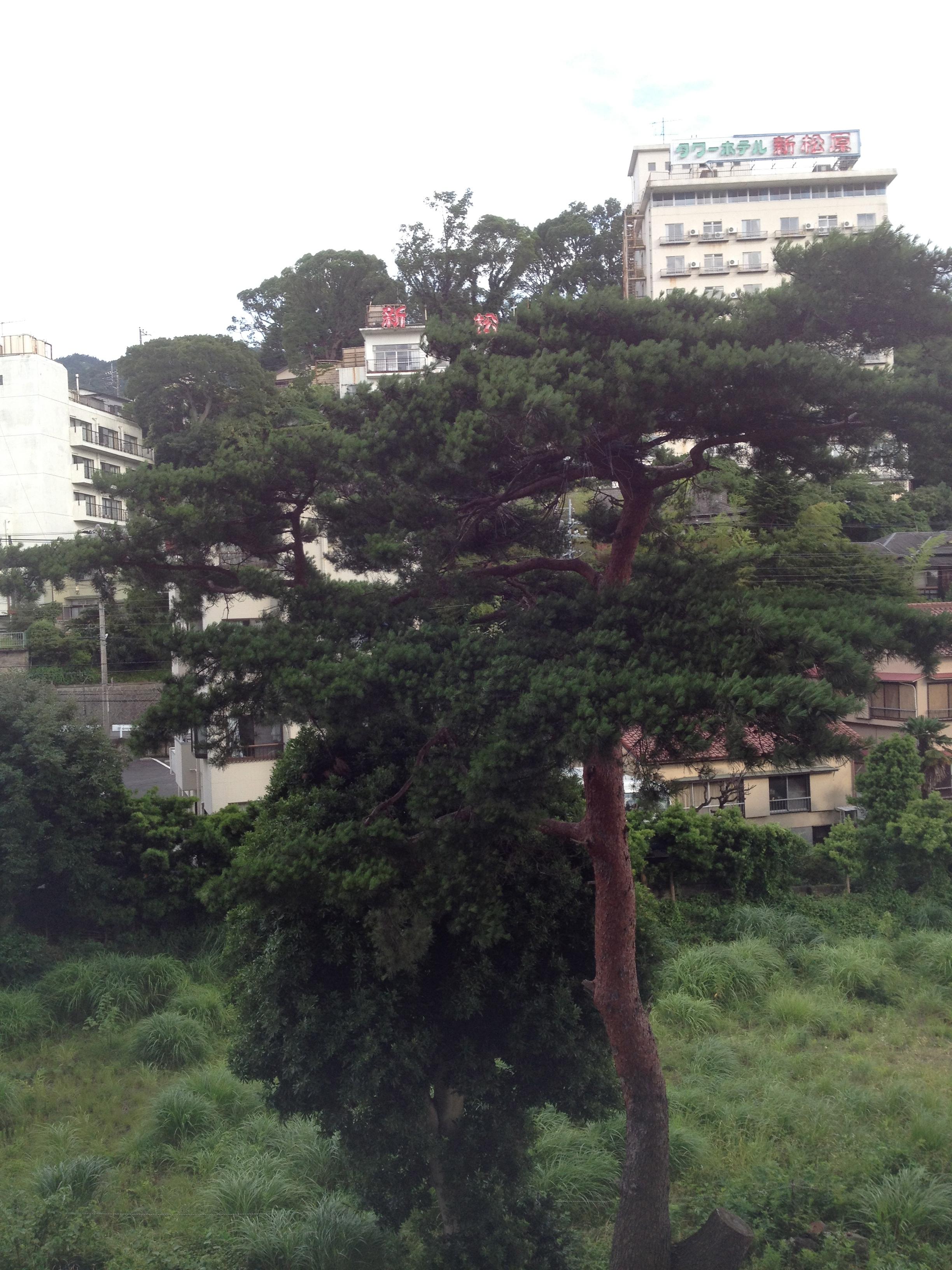 滞在中の部屋から見える木。毎年来るたび、頑張ってるなあ、と思う