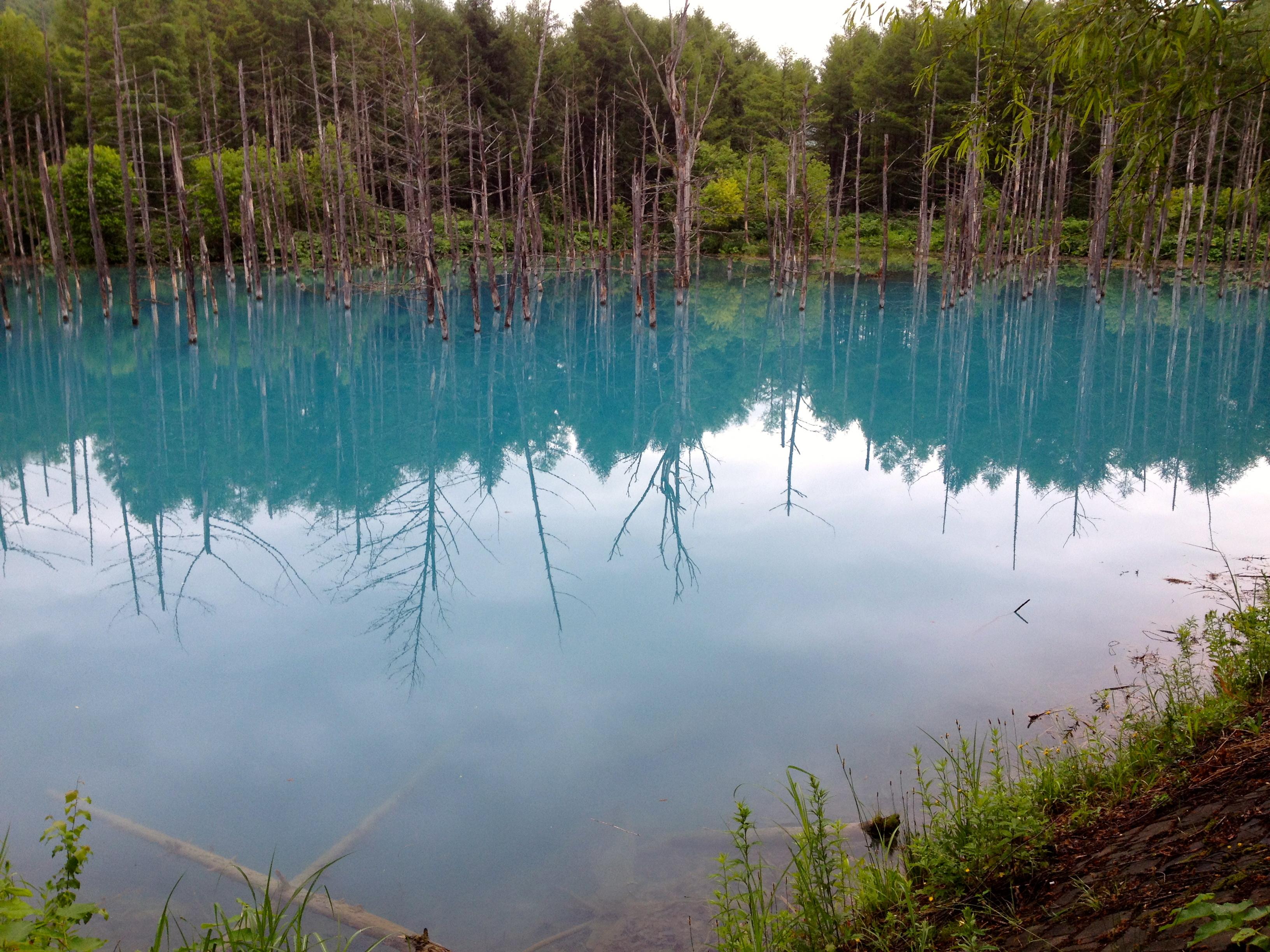 青い池(北海道・美瑛白金)にて